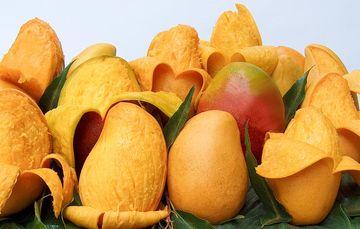 Nayarit es el segundo productor nacional de mango, con 322 mil 388 toneladas anuales