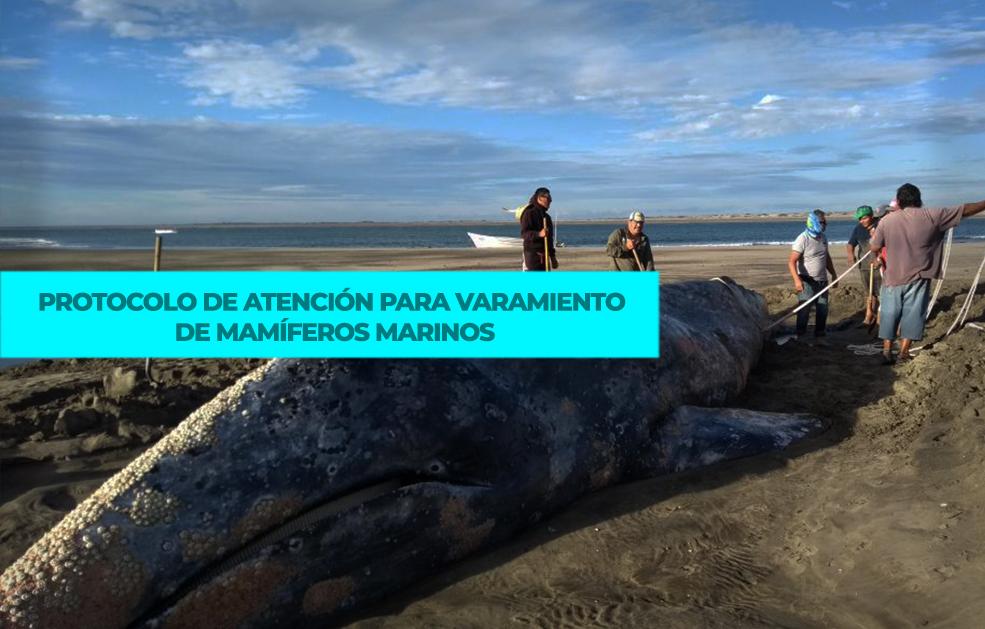 Protocolo de atención para varamiento de mamíferos marinos.