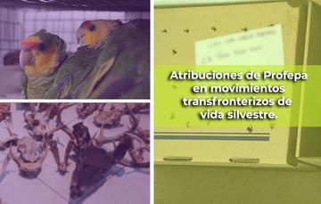 Atribuciones de Profepa en movimientos transfronterizos de vida silvestre