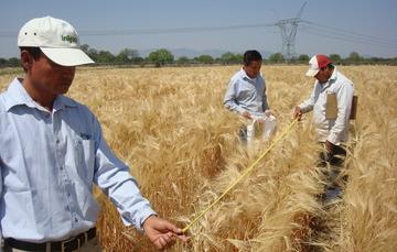Los especialistas mejoran la producción de los alimentos