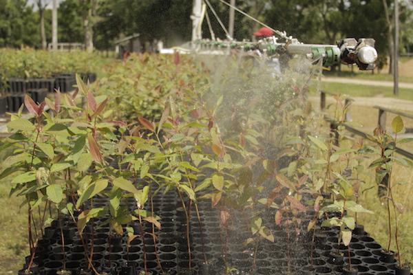 La importancia de los viveros en la reforestaci n yo for Viveros en penalolen