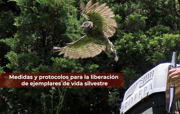 Medidas y protocolos para llevar a cabo la liberación de ejemplares de vida silvestre.