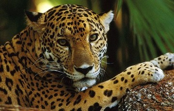 Es necesario que las sociedades conozcan la importancia de sostener la vida en la Tierra, porque casi una cuarta parte de todas las especies corren el riesgo de extinguirse en las próximas décadas.