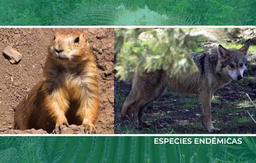 Especies endémicas en México