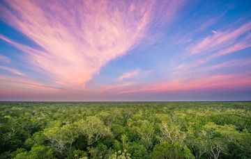 Paisaje de la selva baja característica de Yucatán.