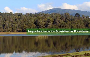 Importancia de los Ecosistemas Forestales