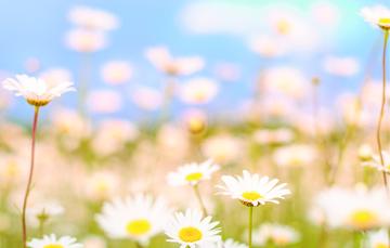 Las flores llegan para quedarse gracias a la primavera.
