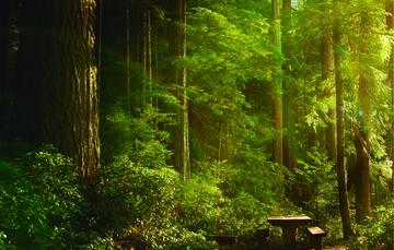 Los bosques son los principales proveedores de oxígeno de la tierra cuidar de ellos es prioridad ambiental.