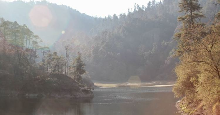 Los bosques juegan un papel crucial en el ciclo del agua.