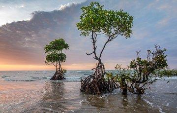 Biodiversidad y Cambio Climático. Retos prioritarios para 2020