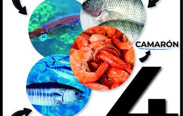 El camarón, el atún, la mojarra y el calamar: El cuarteto perfecto para pasar la cuaresma.