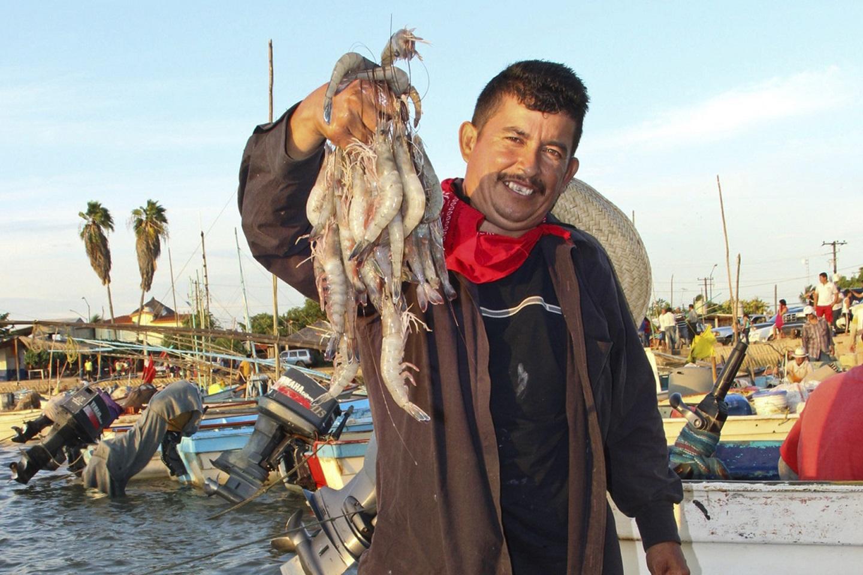 La temporada de captura nacional de camarón 2019-2020 registró un volumen de producción de 47 mil 664 toneladas de crustáceo.