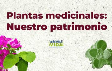Plantas medicinales: Nuestro patrimonio