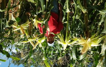 El acompañamiento técnico es importante para mantener las características de la semilla