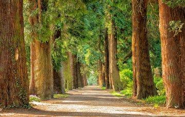 La naturaleza misma sigue contando con uno de sus más grandes aliados, los árboles.