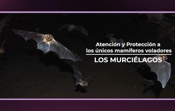 Los murciélagos, los únicos mamíferos voladores