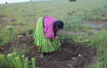 Las zonas forestales en manos de ejidos y comunidades indígenas presentan mayor grado de conservación