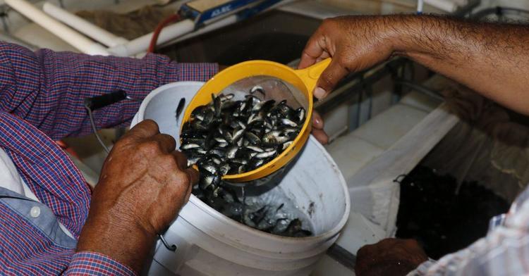 Beneficia Agricultura a pescadores de aguas continentales con el programa nacional de Mejoramiento Productivo