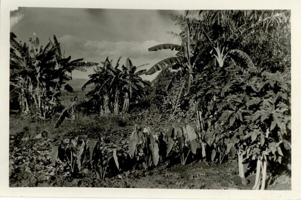 """Para recordar esta fecha, la Mapoteca presenta esta imagen titulada: """"Fotografía del paisaje Tropical"""", elaborada en el siglo XX."""