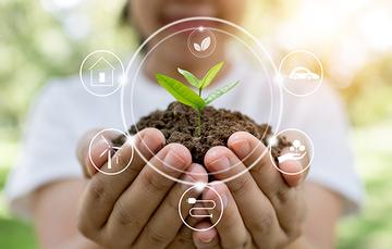 imagen representativa de una planta haciendo referencia a el cuidado del medio ambiente