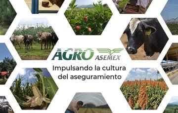 AGROASEMEX