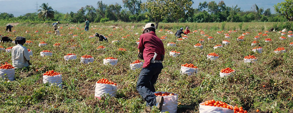 Unidad de producción agropecuaria, elemento indispensable de desarrollo |  Secretaría de Agricultura y Desarrollo Rural | Gobierno | gob.mx