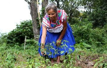 El chile: color y sabor de las tradiciones mexicanas