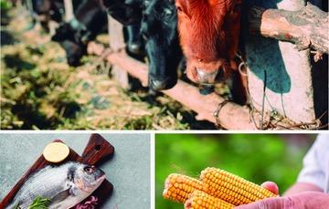 Pesca, Agricultura y Ganadería forman parte del primer eslabón de la cadena productiva.