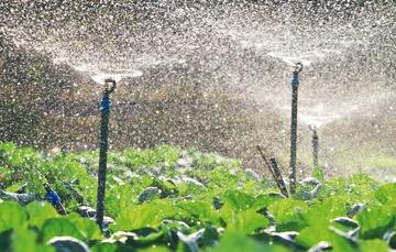La innovación tecnológica es una herramienta útil en el sector agrícola
