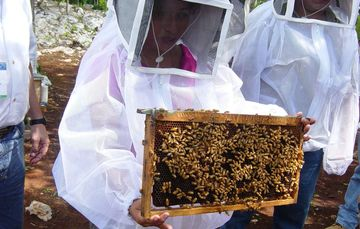 apicultora