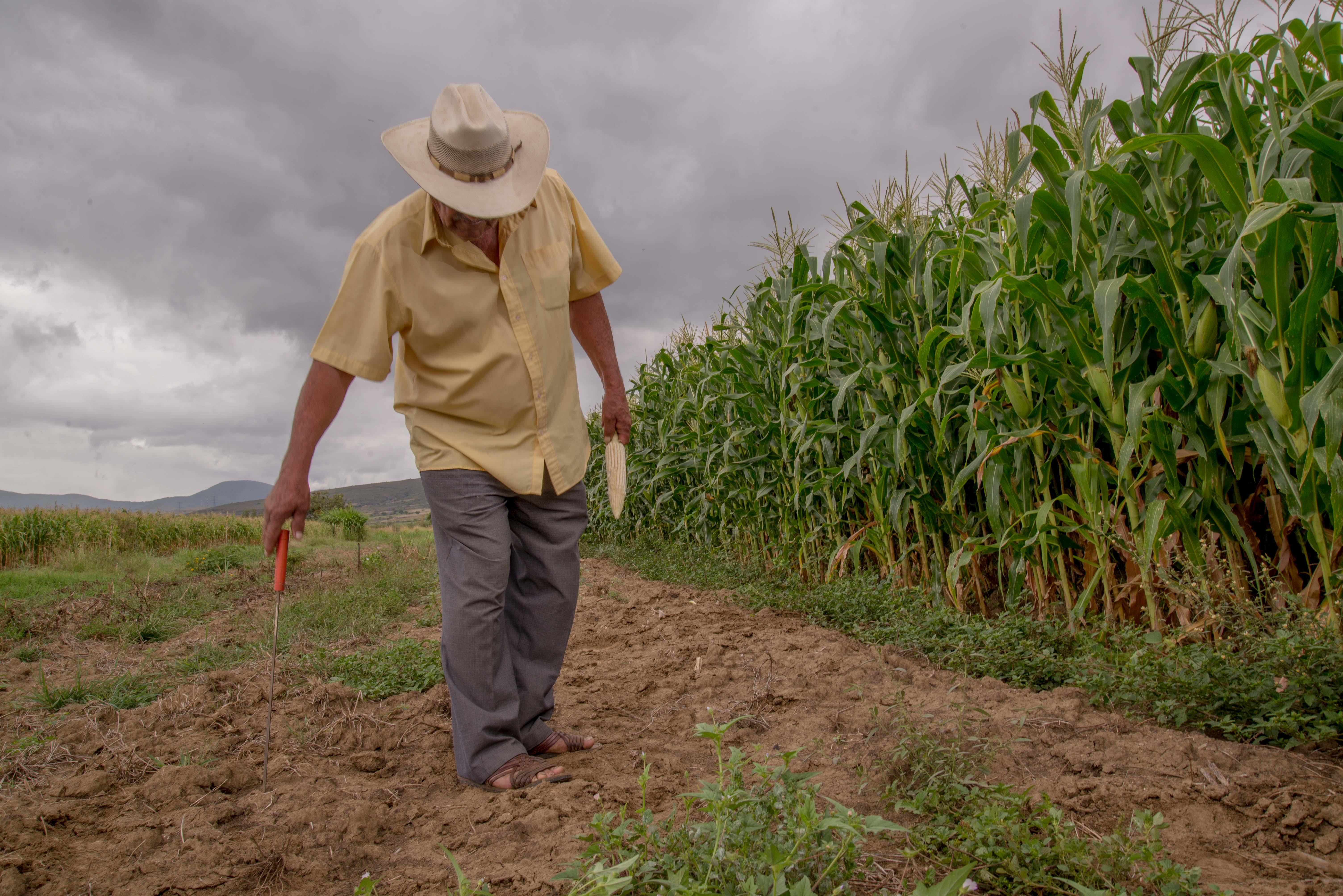 El campo mexicano es una forma de vida sana, buena con valores y cultura.