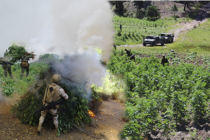 Personal militar en erradicación.