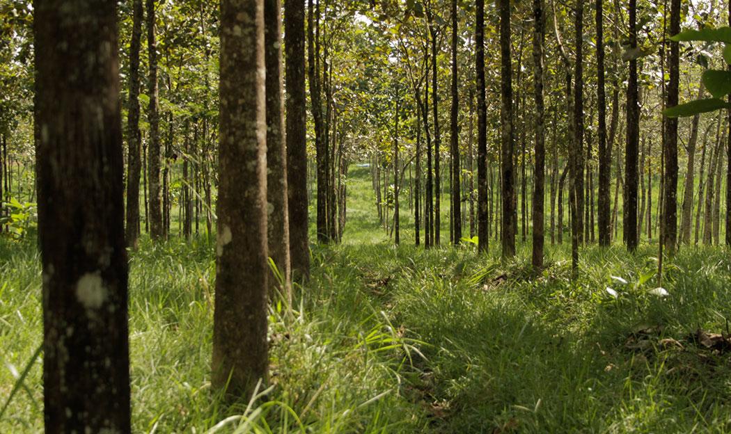 Plantaciones forestales comerciales comisi n nacional for Importancia de los viveros forestales