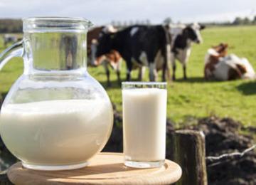 Boletin de leche