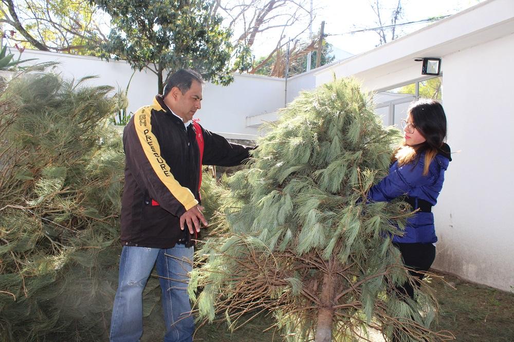 Directorio de centros de acopio de árboles de Navidad