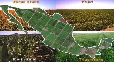 Mapa con la estimación de superficie sembrada de cultivos básicos