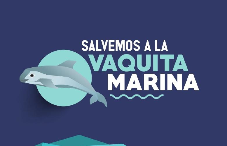 Salvemos a la vaquita marina
