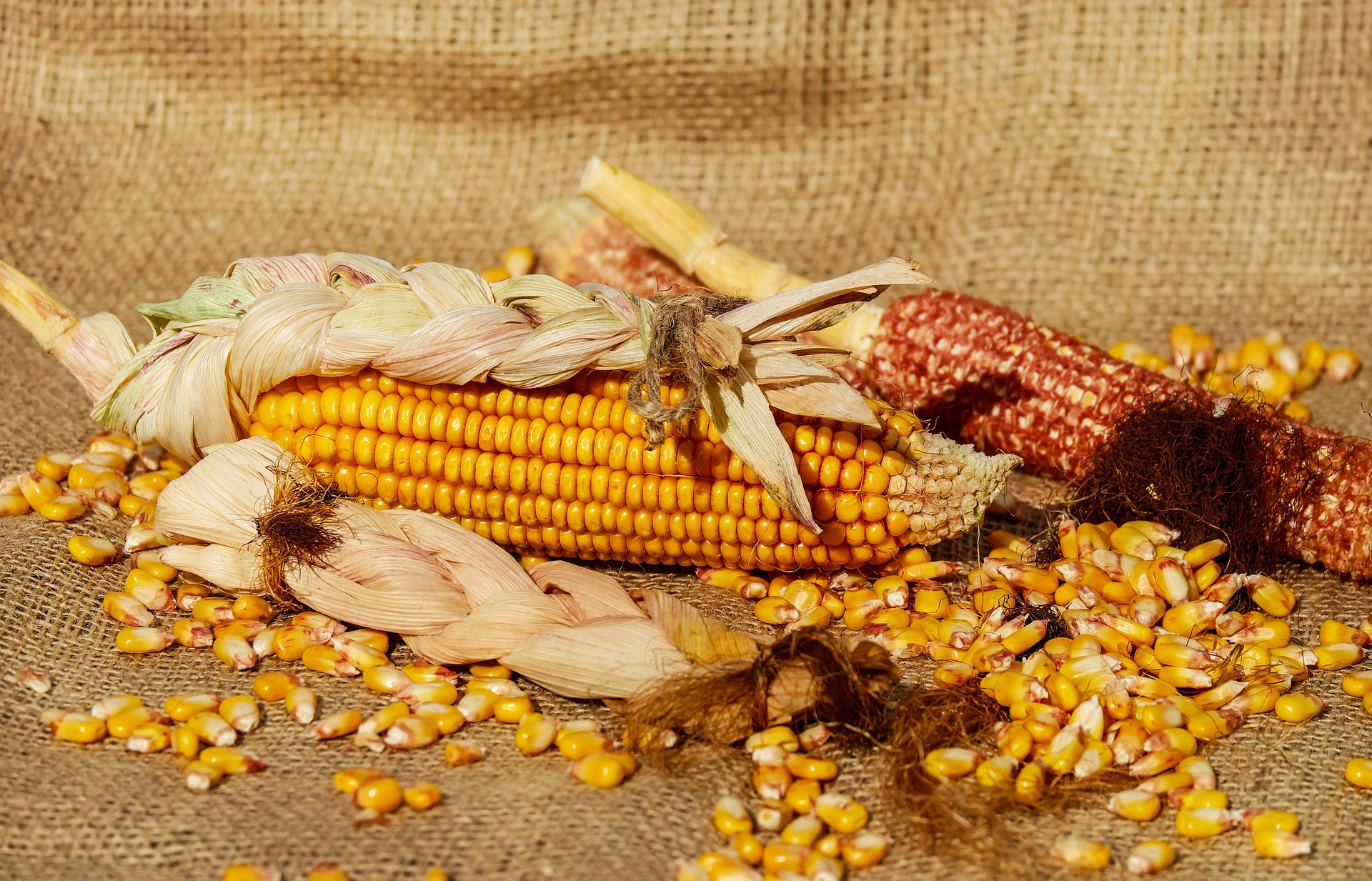 foto de maíz sobre un costal