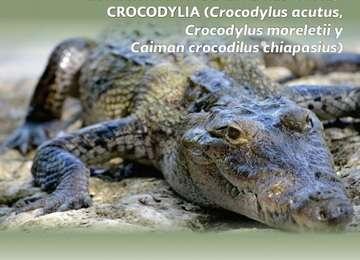 Programa de Acción para la Conservación de Especies (PACE): Crocodylia
