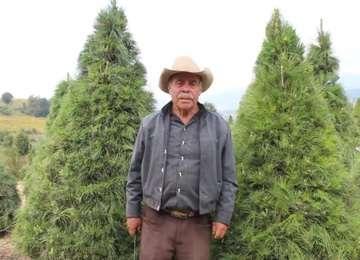 Productore de Xonacatlán, Estado de México, posa junto a dos árboles de su plantación.