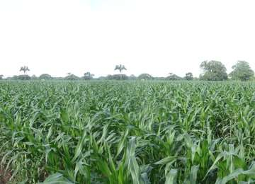 Imagen de un campo de cultivo.