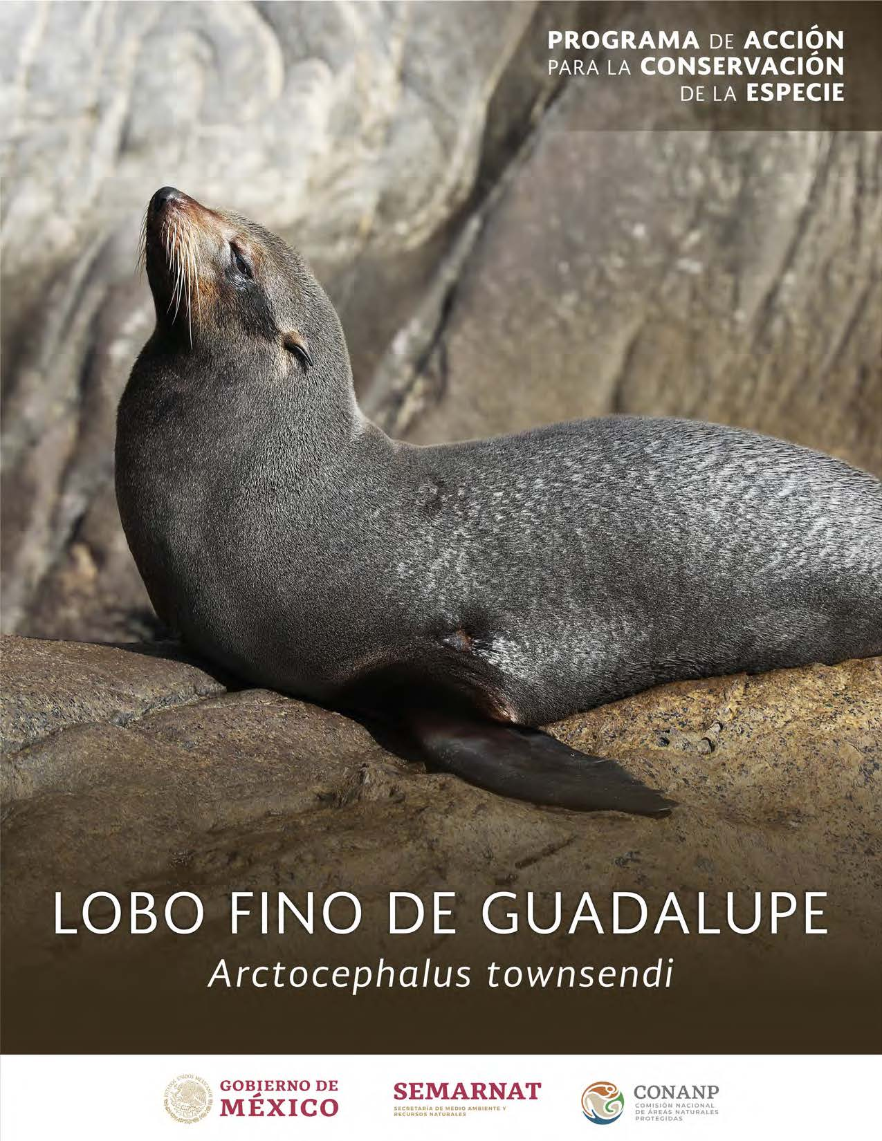 PACE: Lobo Fino de Guadalupe
