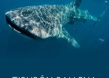 Portada del PACE Tiburón Ballena (Rhincodon typus)