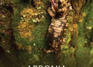 Portada del PACE Abronia (Abronia spp.)