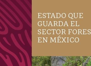 Estado que guarda el Sector Forestal en México.