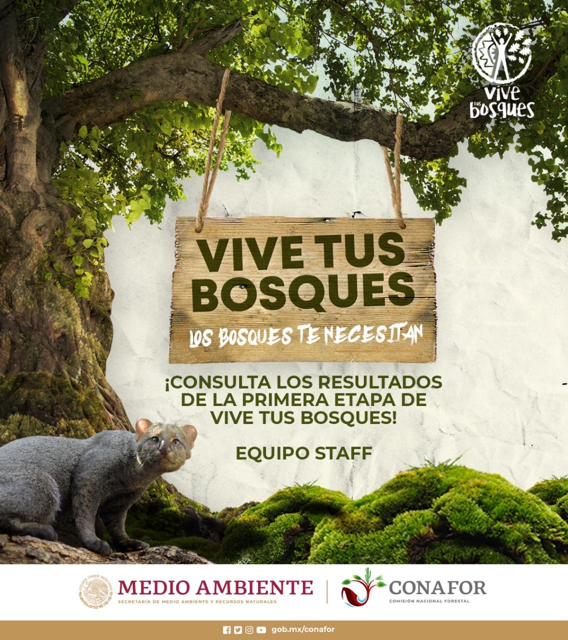Resultados de la primera etapa de la convocatoria Vive Tus Bosques