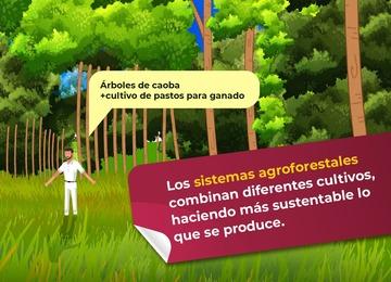 Imagen de ejemplo de sistema agroforestal.