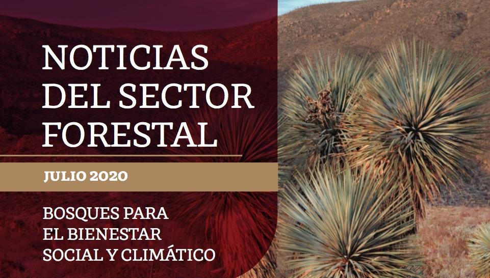 Noticias del sector forestal. Julio 2020