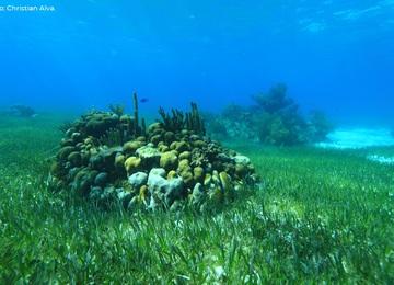 Infografías del Proyecto Resiliencia. Arrecifes de coral.