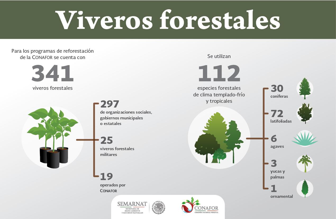Viveros forestales yo planto mi futuro campa as for Proyecto productivo de vivero forestal